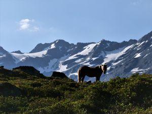 Das Rössli im Dischmatal geniest das leichte Leben in der Sommerfrische und hat die Wanderer zur Grialetsch-Hütte(SAC) fest im Blick. Dürrboden (GR) 30.07.2020