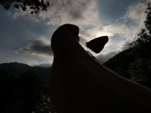 Feierabend mit Schmetterling.