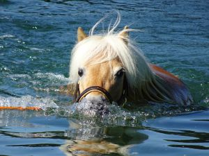 Auch PINO fühlt sich im Wasser herrlich leicht. Nach anfänglicher Skepsis hat er inzwischen grosse Freude an einem Bad im Rhein.