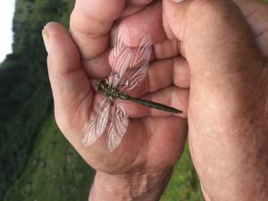 Auf einer Bergwanderung aus dem nassen Gras gerettet.