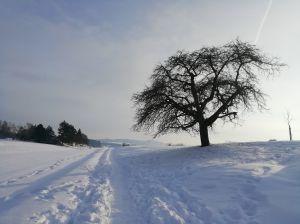 Auf dem Feld in Buchthalen, Nähe Nägelsee, aufgenommen mit dem Handy am 19.1.2021 um 9:31