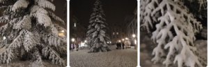 Die wunderschöne Tanne auf unserm Froni zur Weihnachtszeit hat mich in den heimischen Ferien immer wieder sehr erfreut. Mit Schnee war dies einfach traumhaft, magical ! Danke !