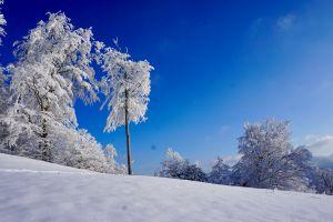 Das Bild wurde am 10.1.21 bei der Wanderung auf das Hörnli im Zürcher Oberland aufgenommen. Es ist auch ein Lieblingsfoto, weshalb ich dieses ebenfalls noch einsenden muss. Der Kontrast vom stahlblauen Himmel zu den weissen, gefroreren Bäumen war so eindrücklich und wie im Bilderbuch. Ich habe das schon länger nicht mehr gesehen. Es ist ein spezielles Jahr mit anderen Umständen, weshalb ich mehr zu Fuss unterwegs war als üblich im Winter. Die weisse Landschaft ist beeindruckend. Ganz besonders!