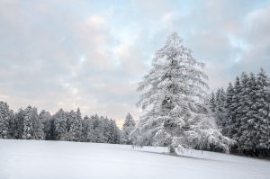 Wie ein verzauberter Baum oder der Winterkönig unter den Tannen in seinem prächtigsten Kleid.