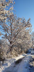 Weshalb auch in die Ferne schweifen wenn der besondere Winter auch in Buchthalen angekommen ist.