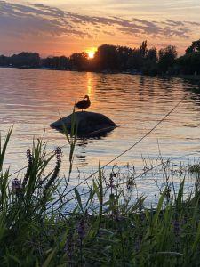 Nach einem sonnigen und warmen Segeltag auf dem Untersee genossen wir den Sonnenuntergang auf der Hafenmole von Radolfzell. Frei, ungebunden und ungestört geniesst auch diese Ente den friedlichen und romantischen Moment an diesem Sommerabend.