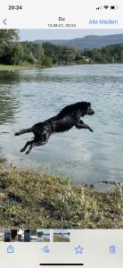 Tanaya geniesst die Freheit mit einem Sprung in den Rhein bei Elikon